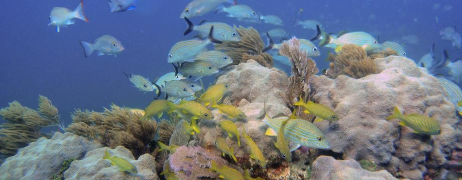 coralssurviv
